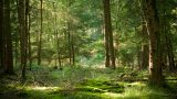forest_0002_layer-5
